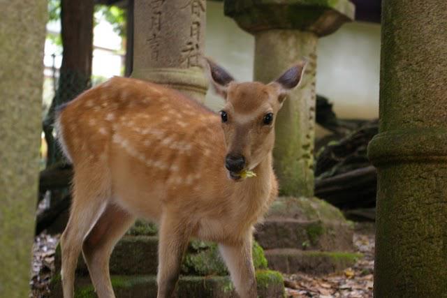 「奈良大和路」サイトの取材に行かせていただきました!