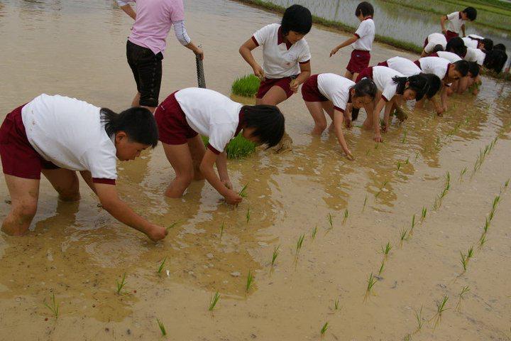 小学校の田植え体験を取材させていただきました!