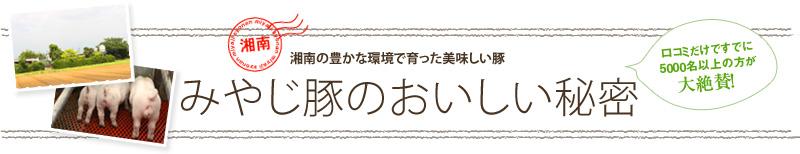 みやじ豚バーベキュー開催 〔4月19日花博記念公園〕